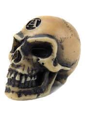 Lapillus Worry Skull